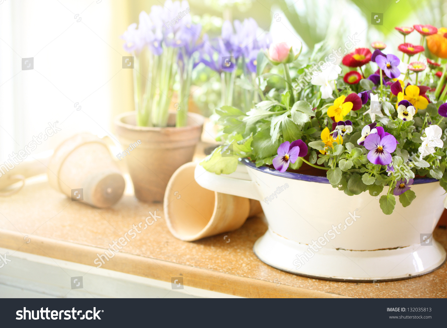 Potted Spring Flowers On Old Vintage Stock Photo Edit Now