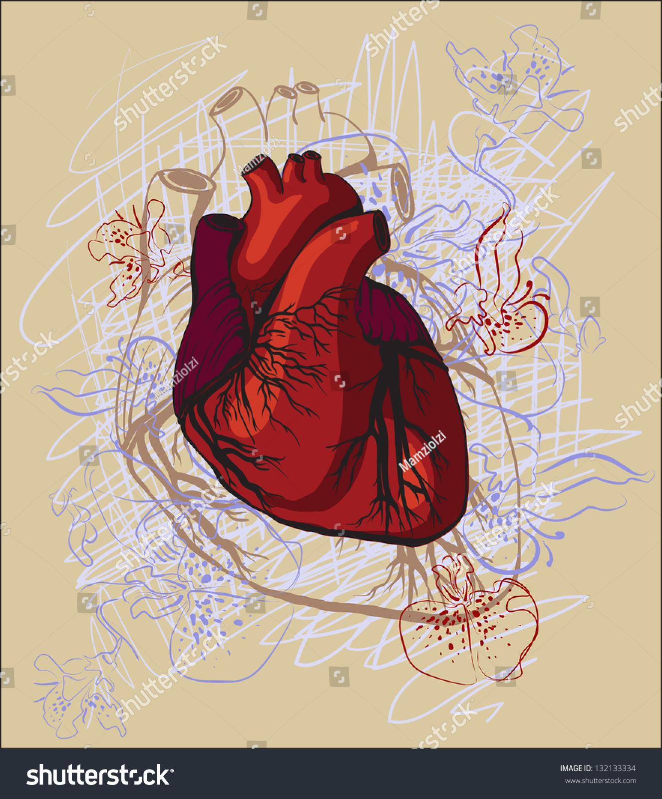 Vector Drawing Heart Anatomical Stock Vector (Royalty Free ...