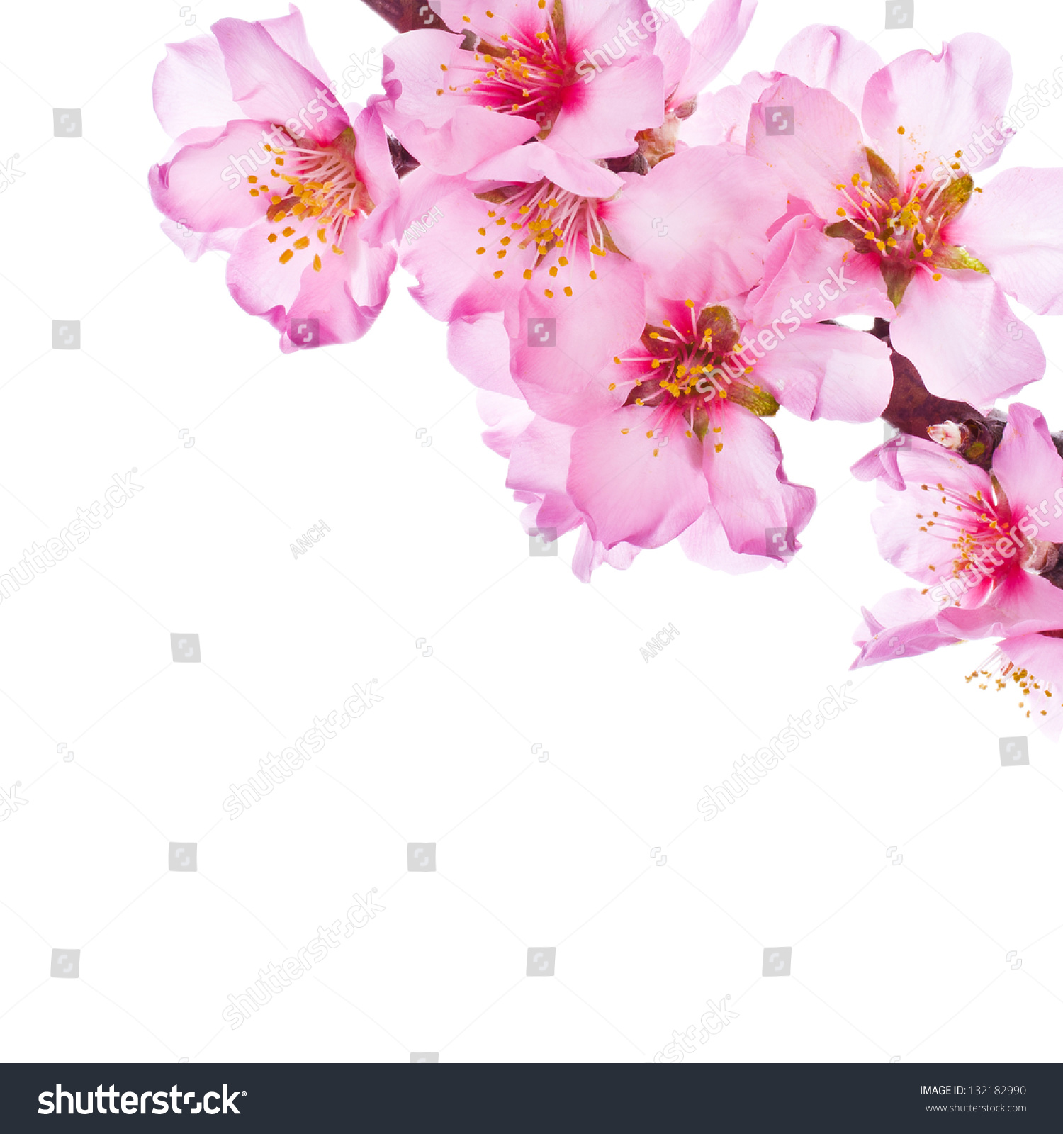 Spring Flowering Branches Pink Flowers No Stock Shutterstock