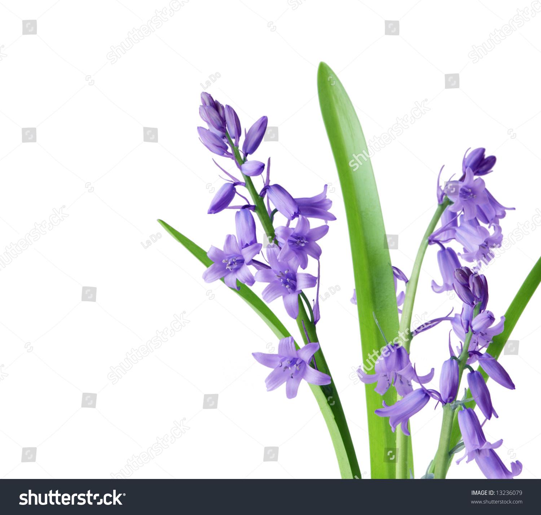 Fine white blue bell like flowers festooning ball gown wedding white blue bell like flowers image collections flower decoration ideas mightylinksfo