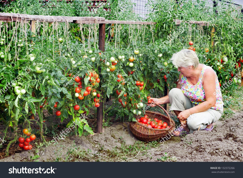 Соседство овощей на грядках: что с чем можно сажать 2