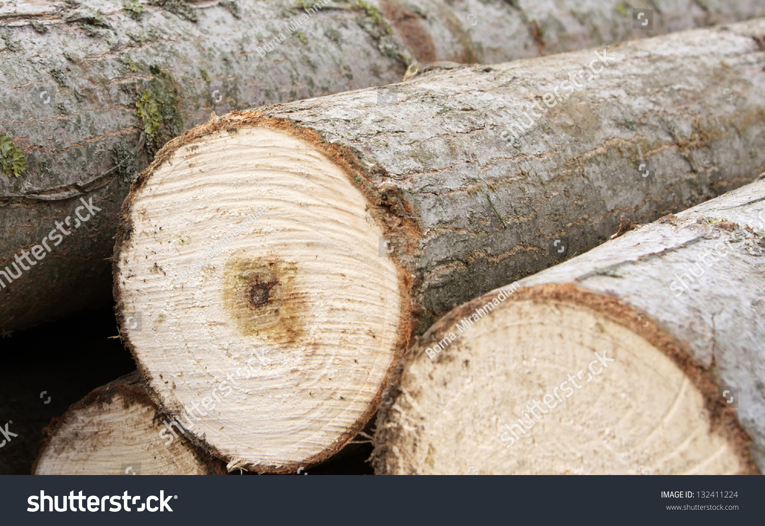 Pile lumber cut forest stock photo shutterstock