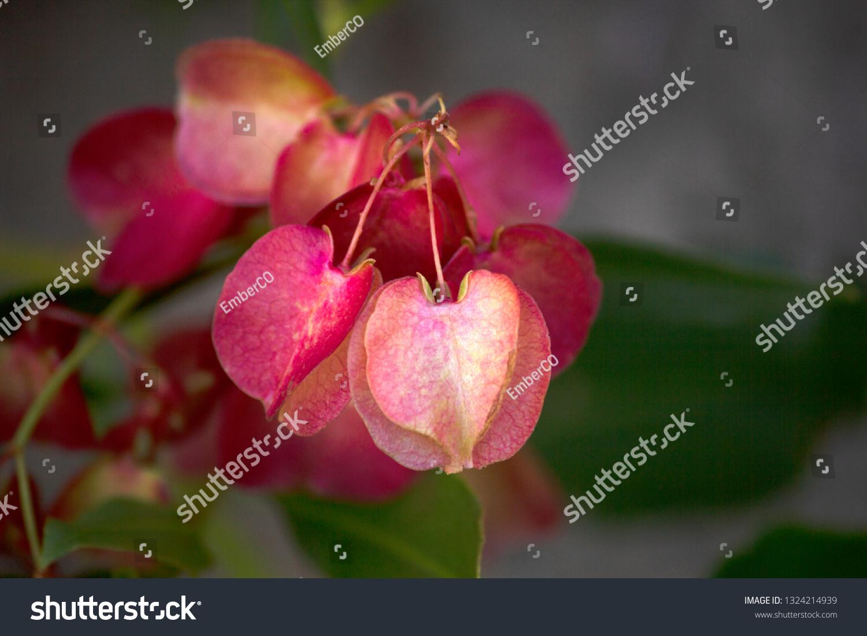 Native Nebraska Plants Images Stock Photos Vectors Shutterstock