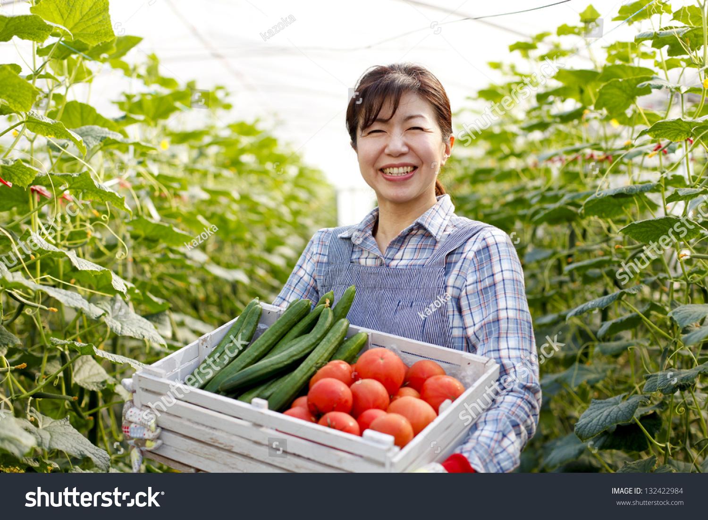 Harvest Vegetables Greenhouses Stock Photo 132422984