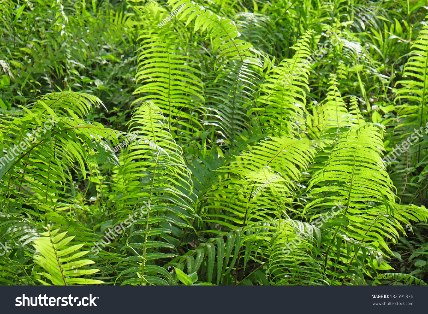 Image Result For How To Start A Rainforest Garden