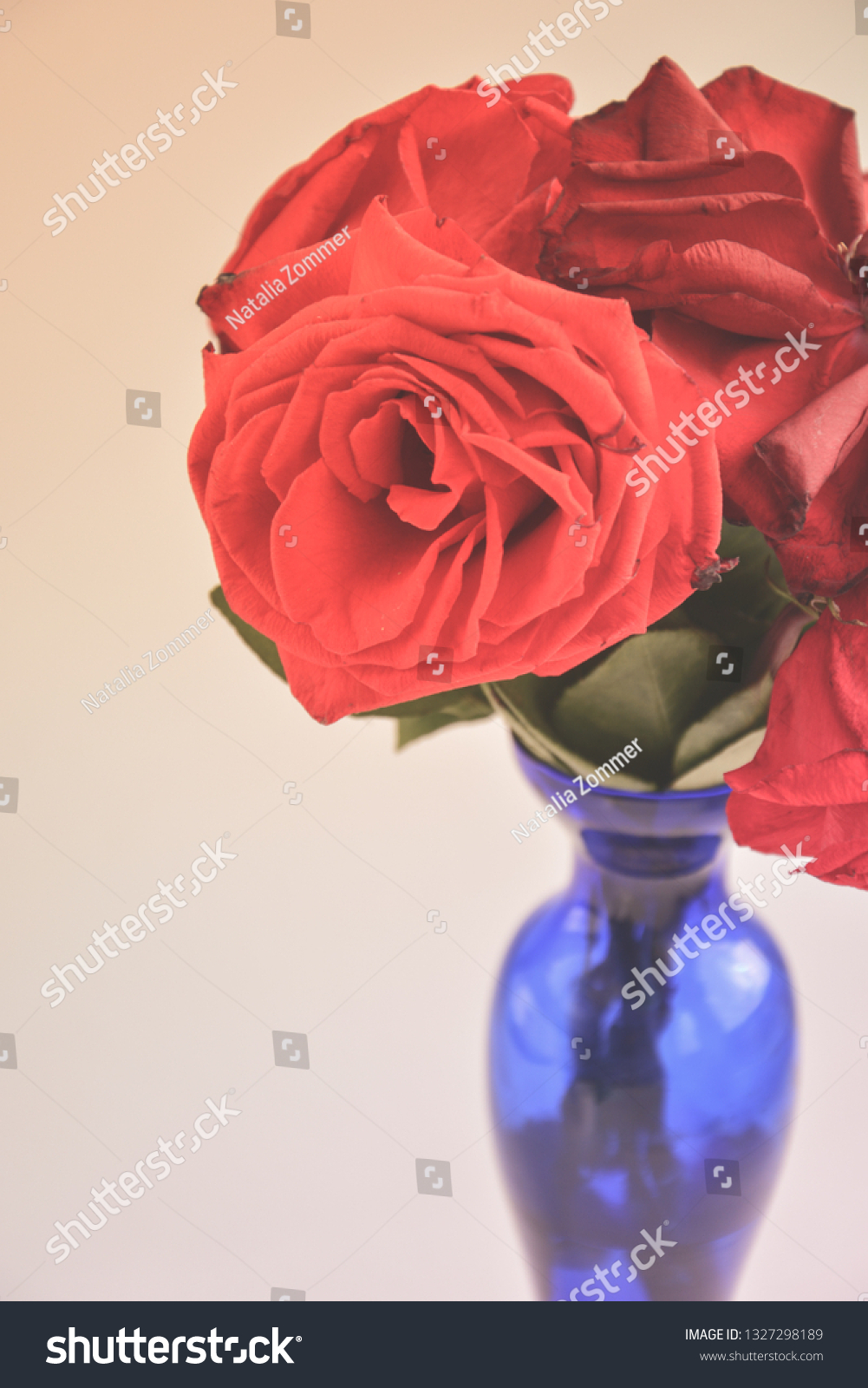 Fading Red Roses Tall Vase Clear Stock Photo Edit Now 1327298189