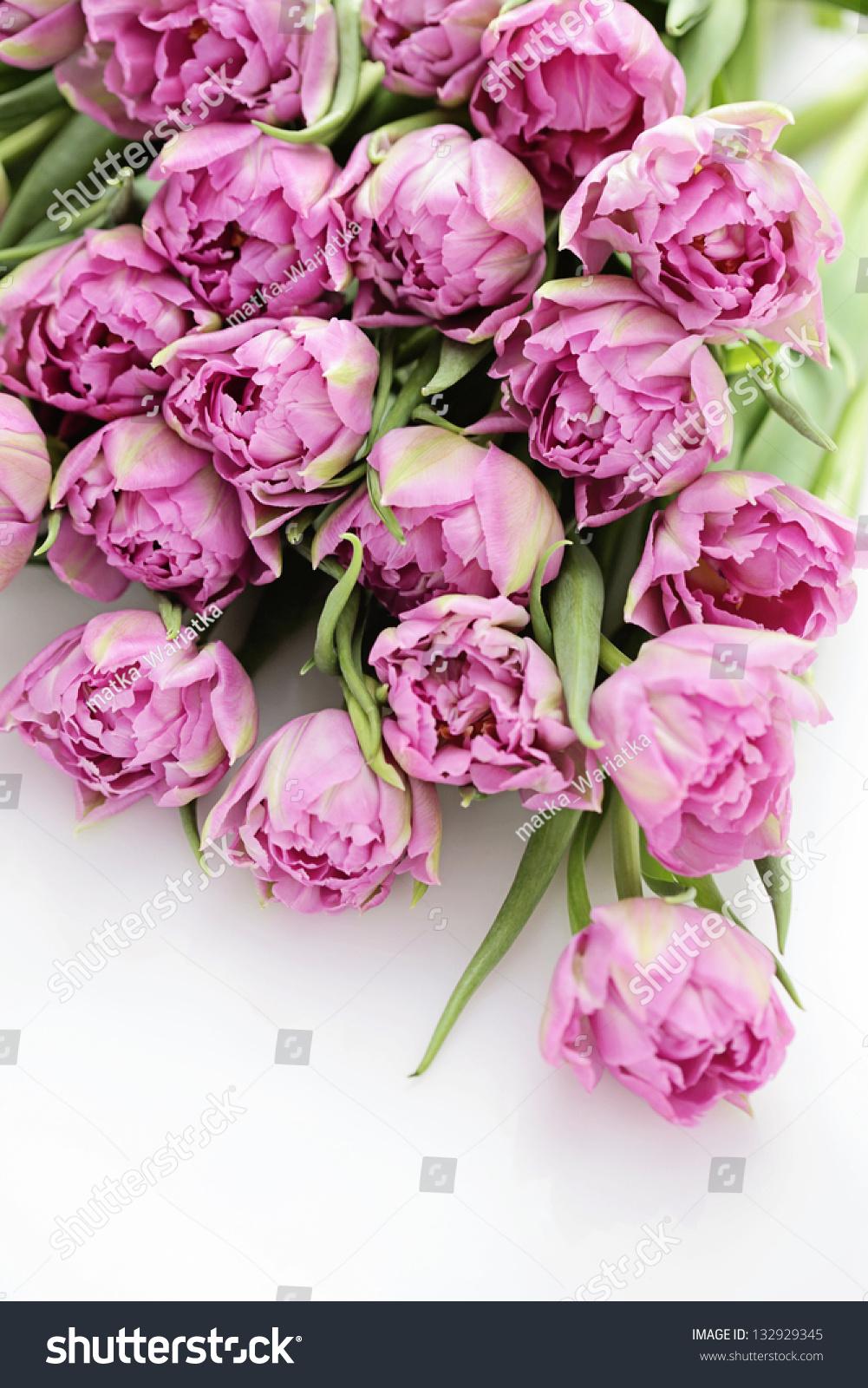 Lovely Pink Tulips Flowers Plants Stock Photo 132929345 Shutterstock