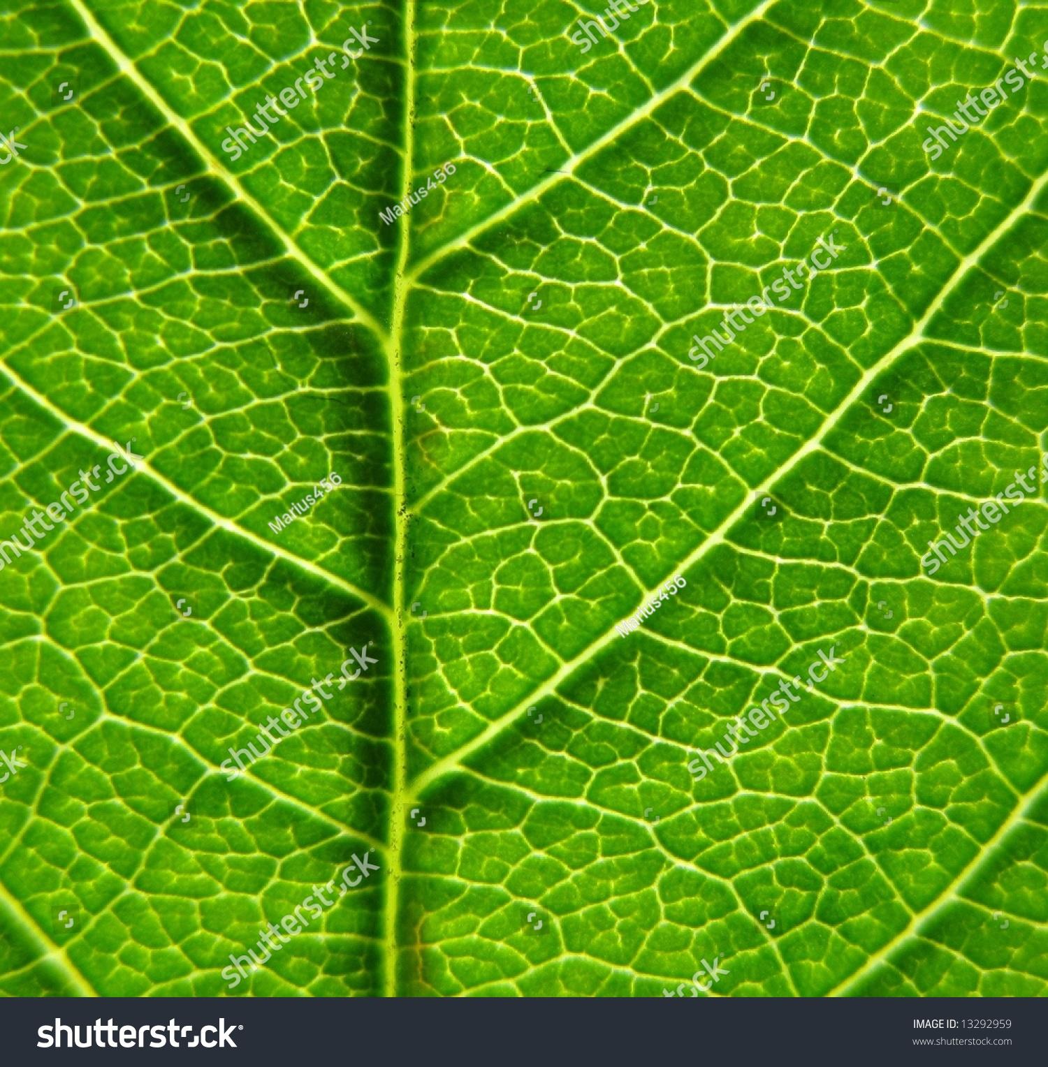 Dark Green Leaf Background Stock Photo 13292959 - Shutterstock