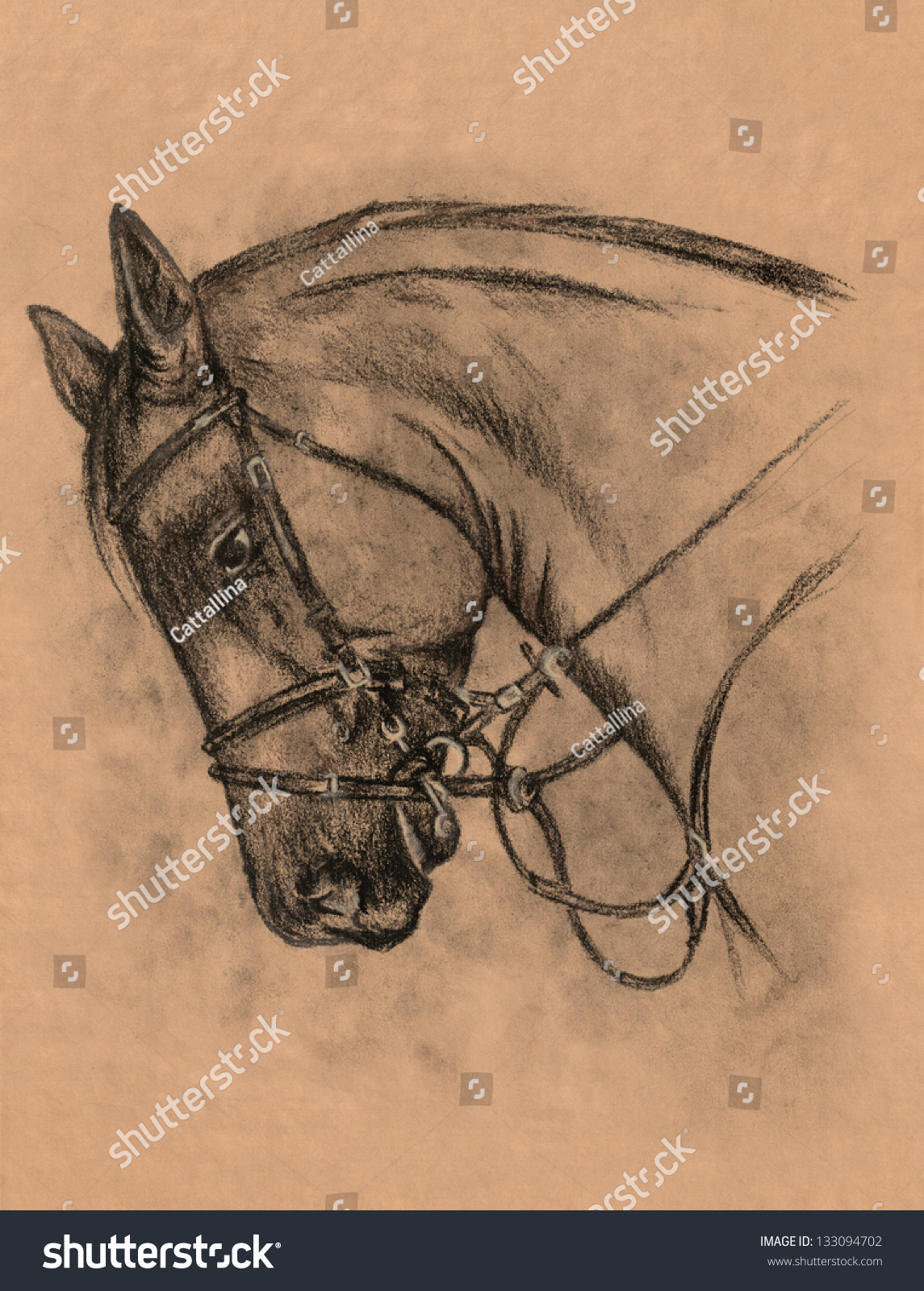 Horse Head Harness Charcoal Pencil Drawing Stock Illustration 133094702