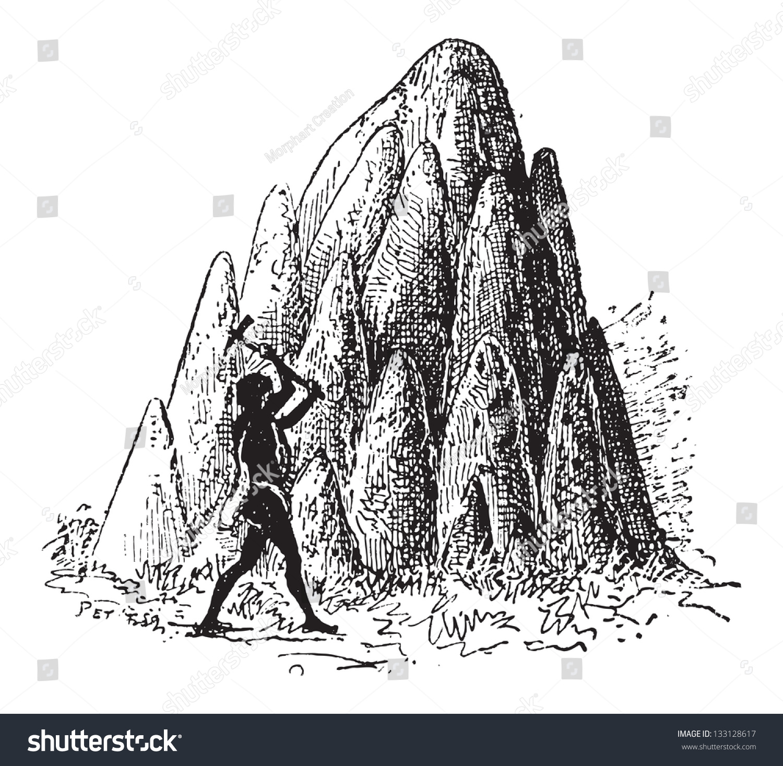 Mound Or Termitaria, Of Termite Or Termitoidae, Shown Are Large ...