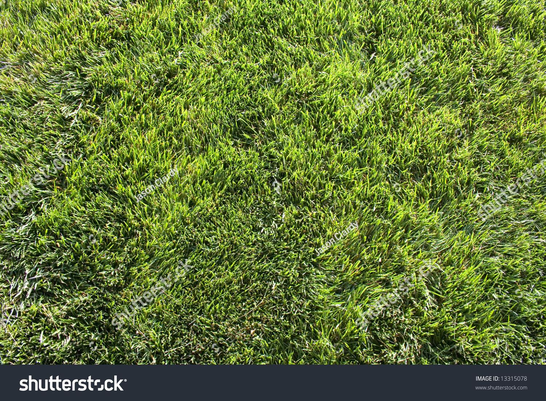 topdown view field grass stock photo 13315078
