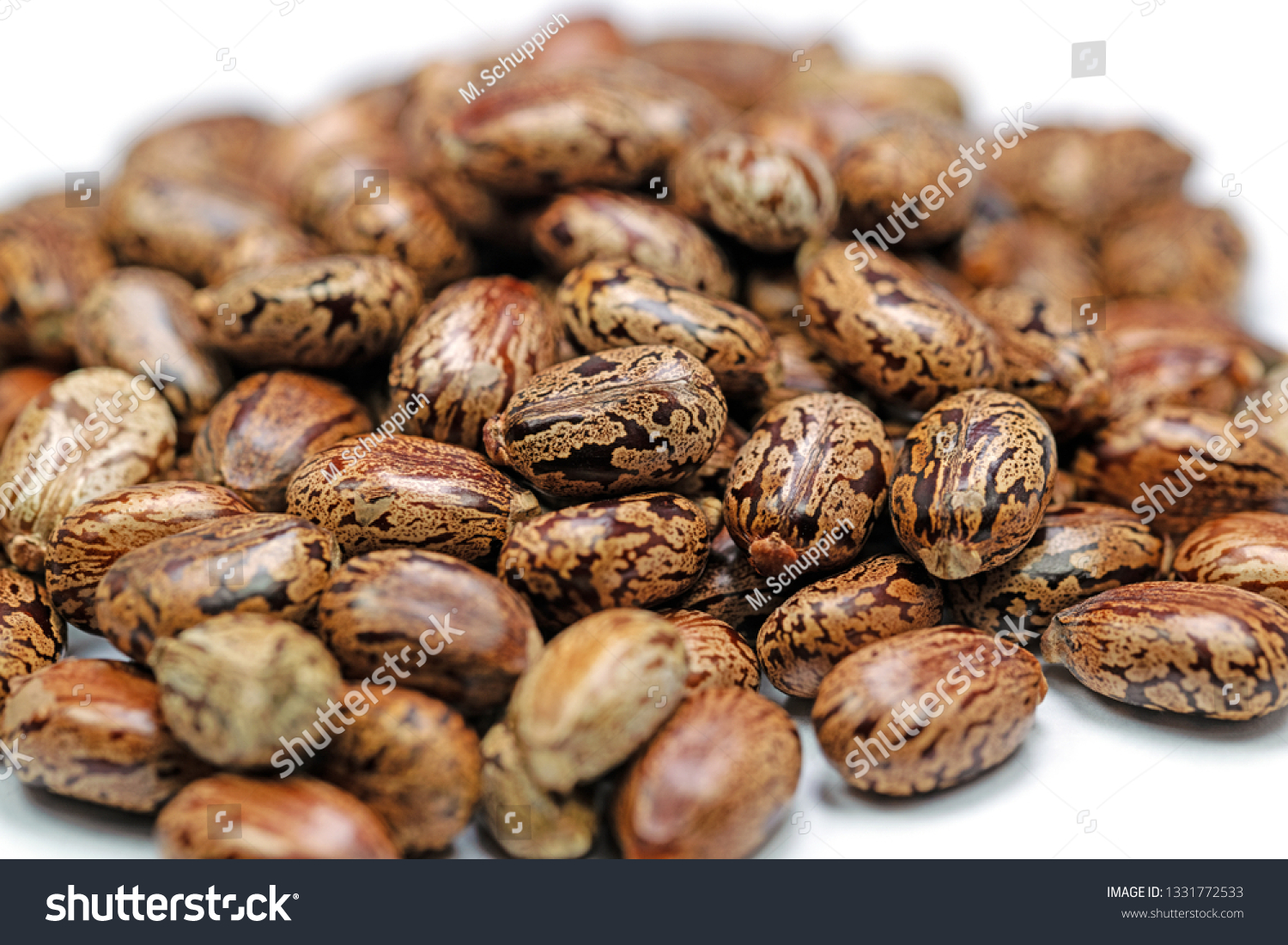 Seeds Miracle Tree Ricinus Communis Stock Photo Edit Now 1331772533