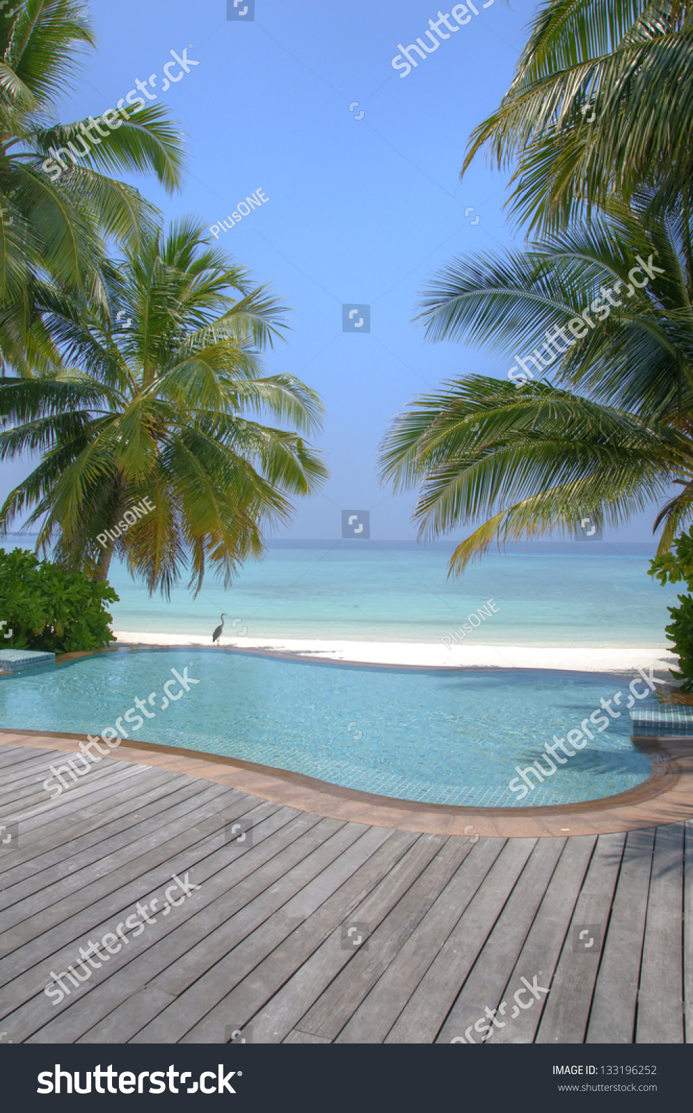 Idyllic beach pool palm trees on stock photo 133196252 - Palm beach pool ...