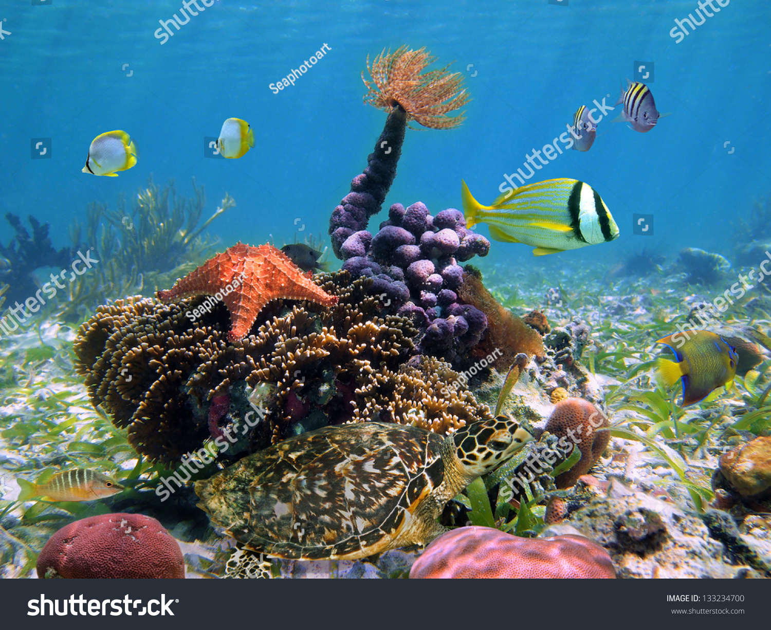 Colorful Underwater Marine Life In A Shallow Coral Reef ... |Colorful Underwater Life