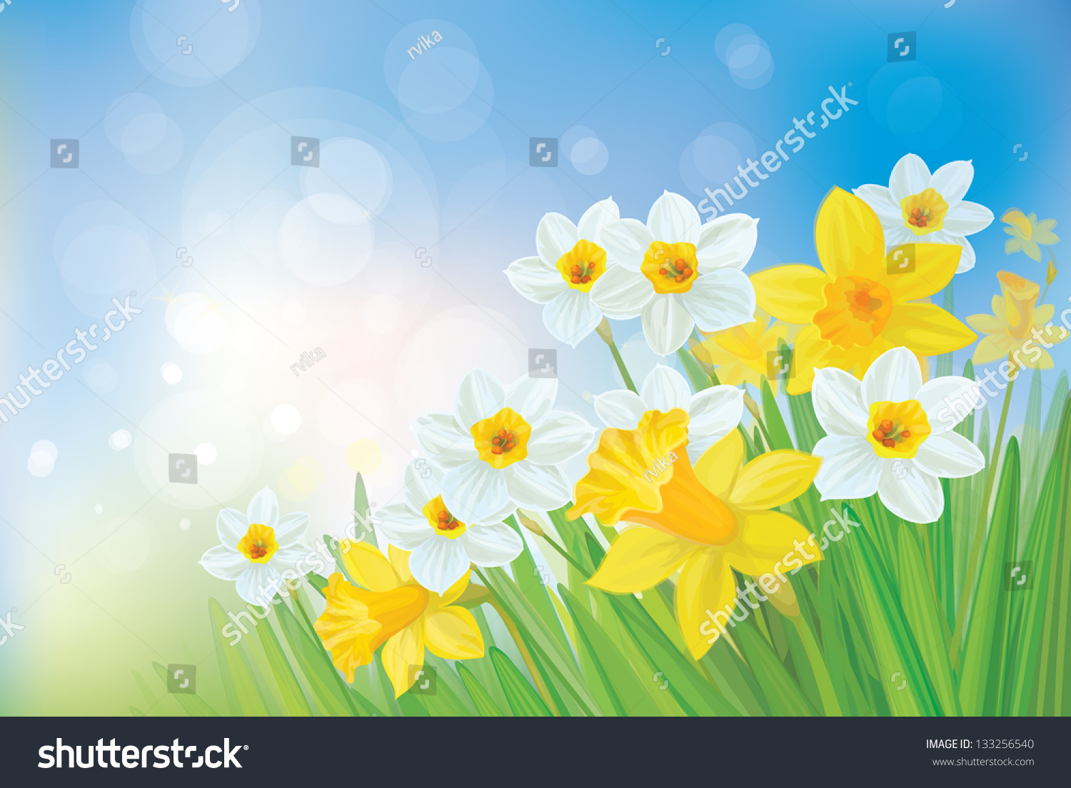 vector daffodil flowers on spring background stock vector