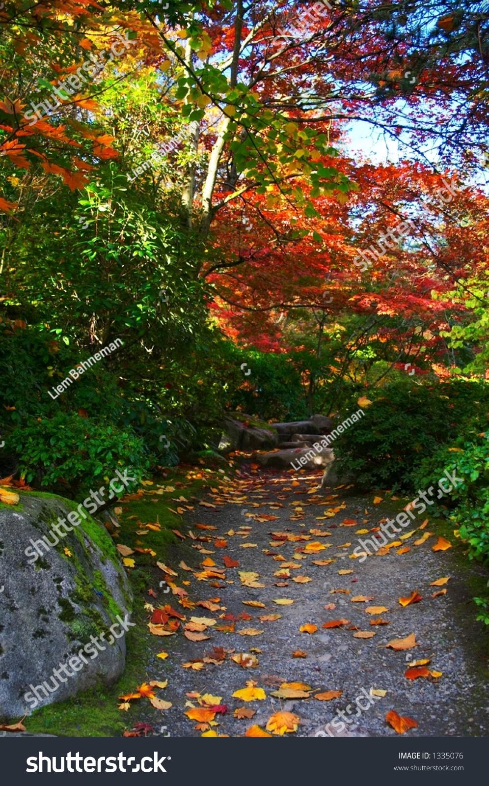Japanese Garden Seattle Stock Photo 372015436 Shutterstock