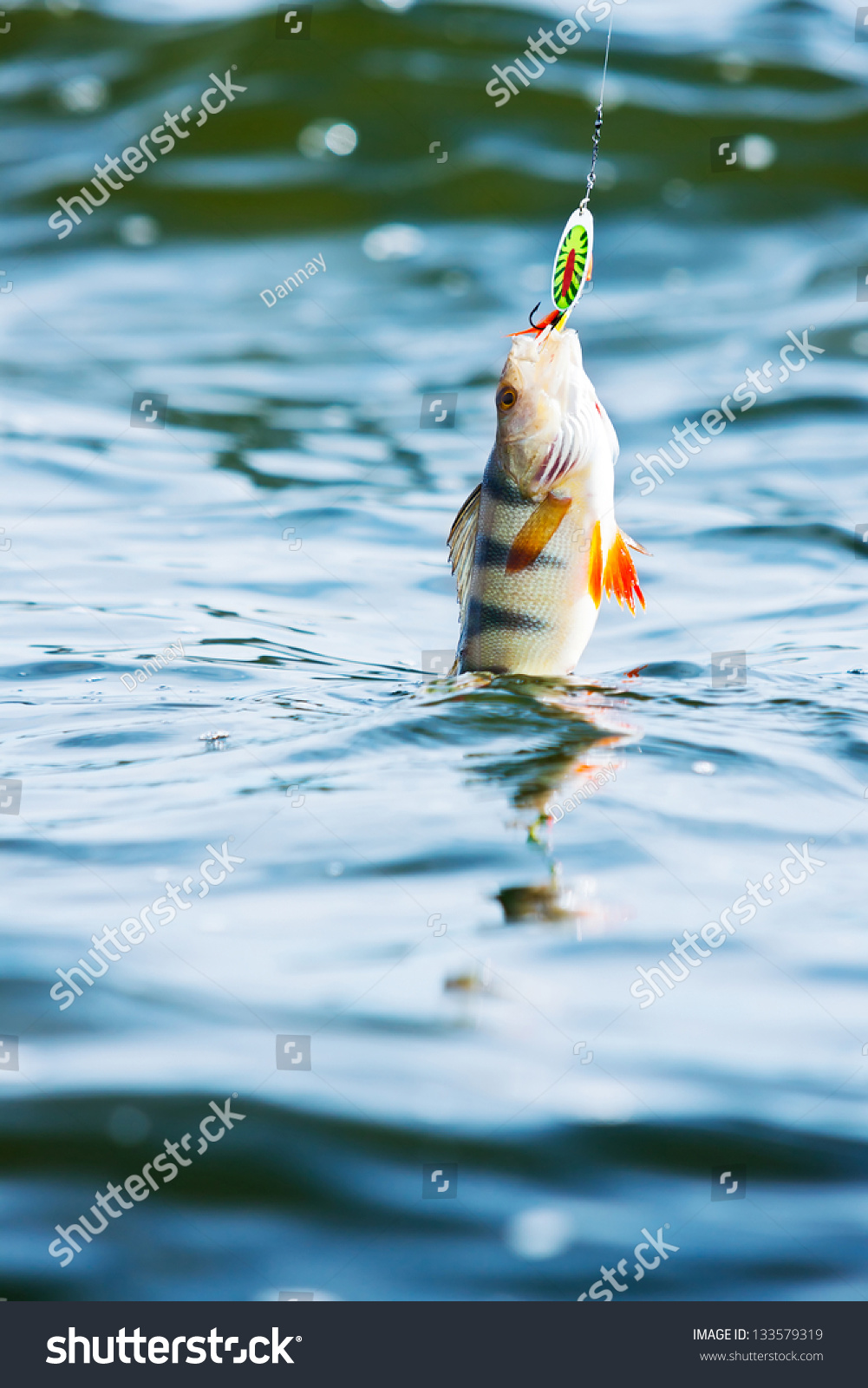 Fat largemouth bass hooked on fishing stock photo for Hooked on fishing