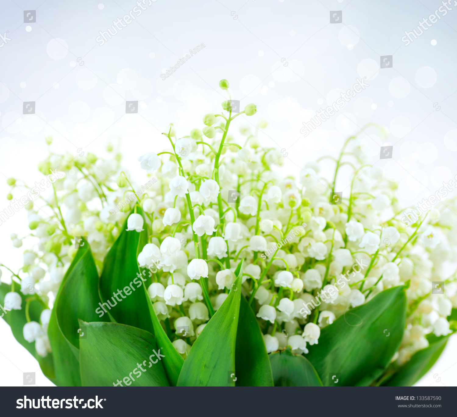 Lilyofthevalley flowers design bunch white spring stock photo lily of the valley flowers design bunch of white spring flower lilyofthevalley izmirmasajfo