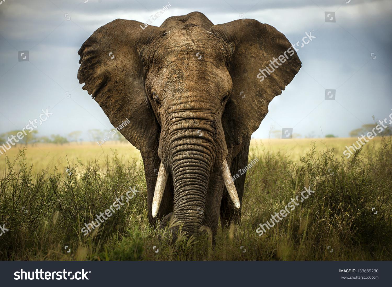 background elephant #133689230