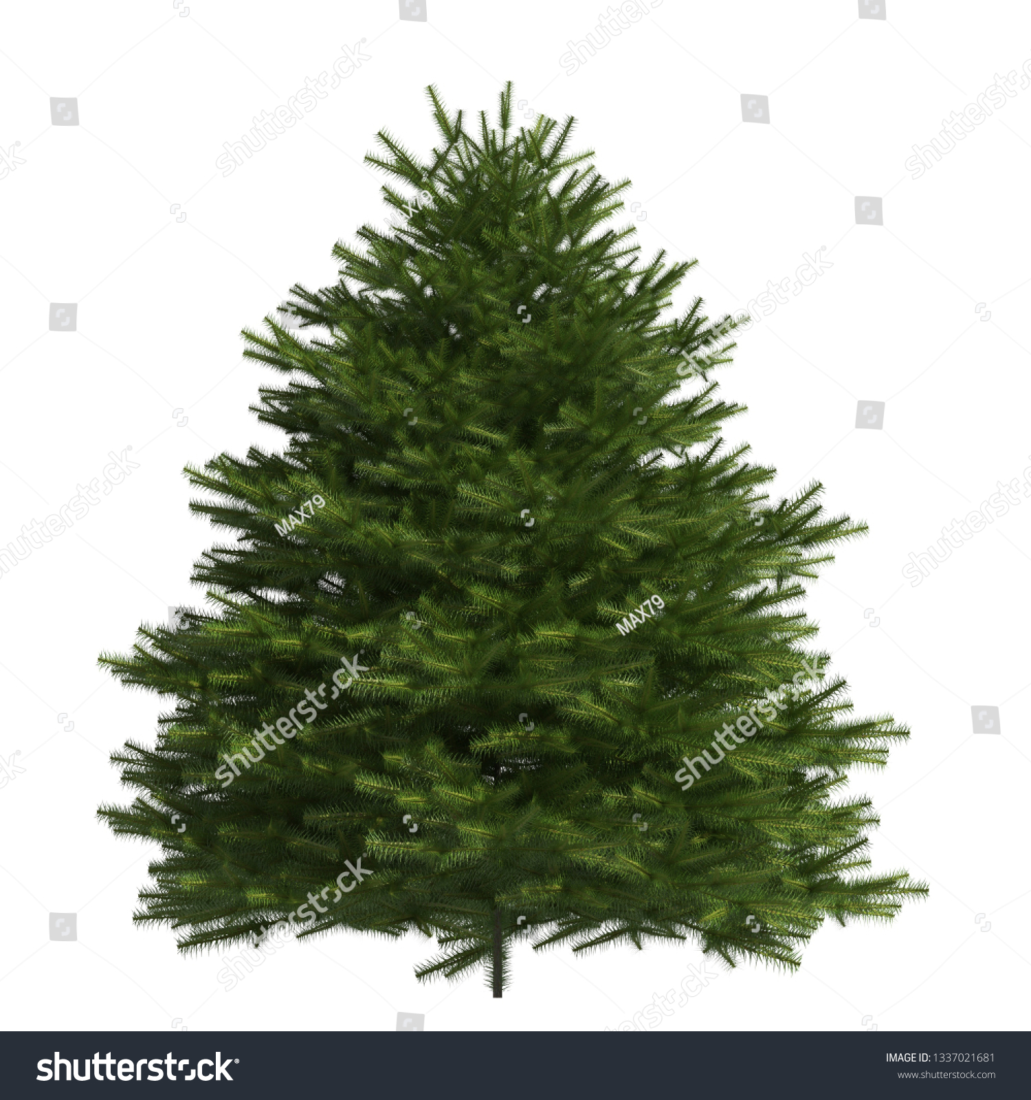 Pine tree 3d illustration isolated on the white background #1337021681