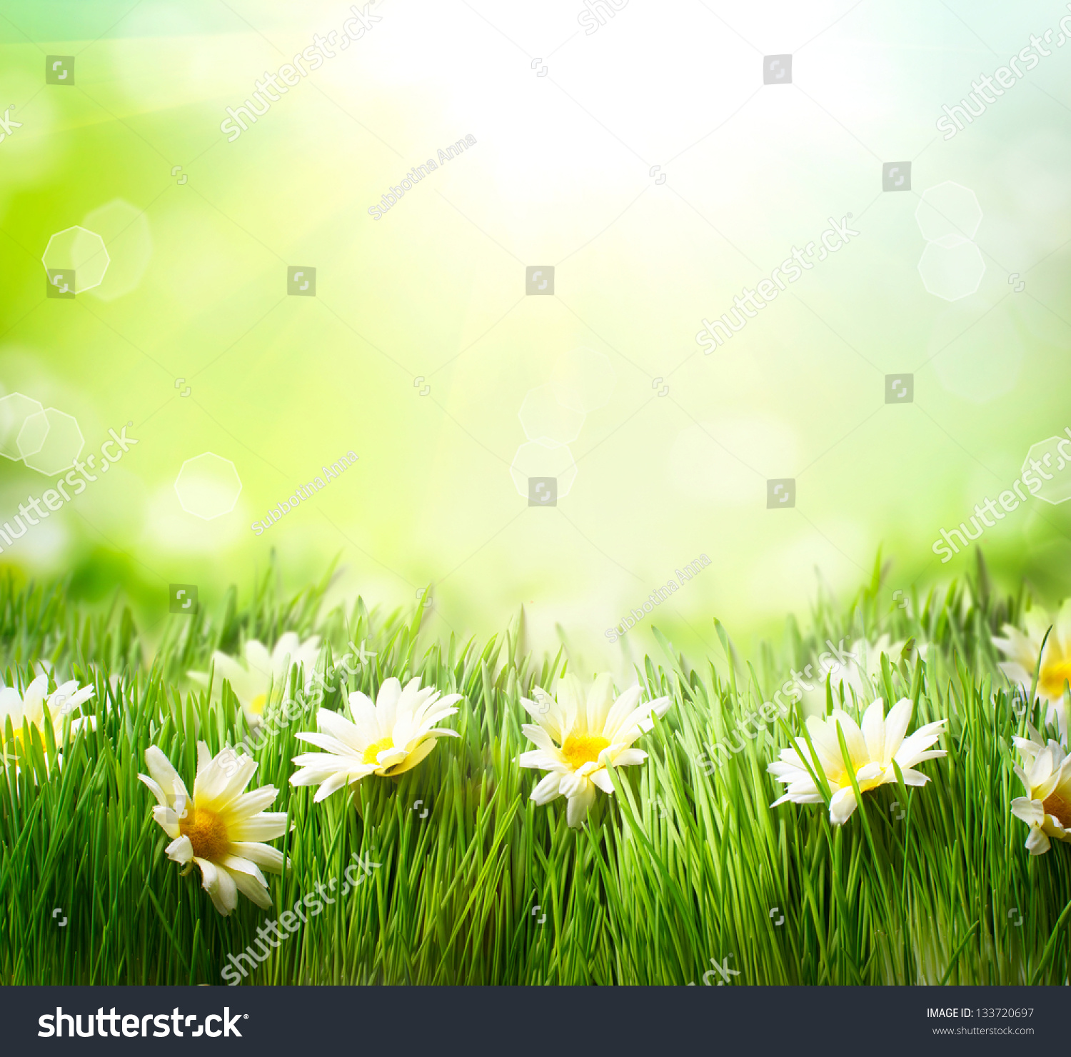 Spring Meadow Daisies Grass Flowers Border Stock Photo
