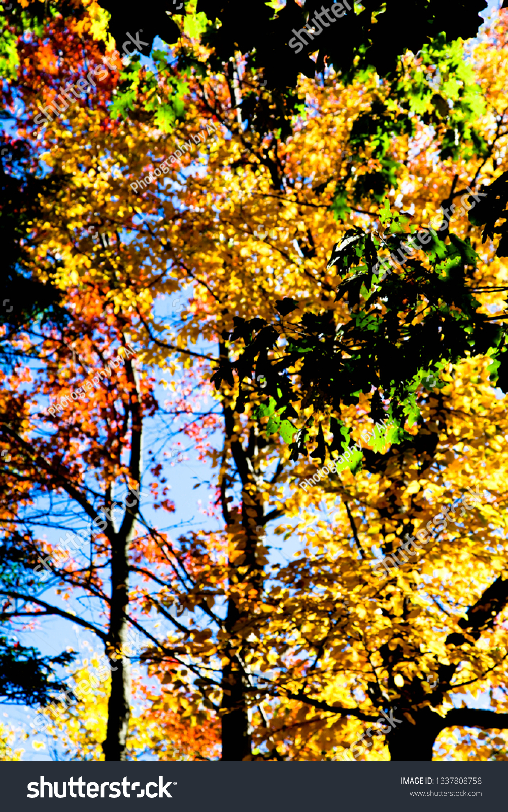 Fall Leaves Backgrounds #1337808758