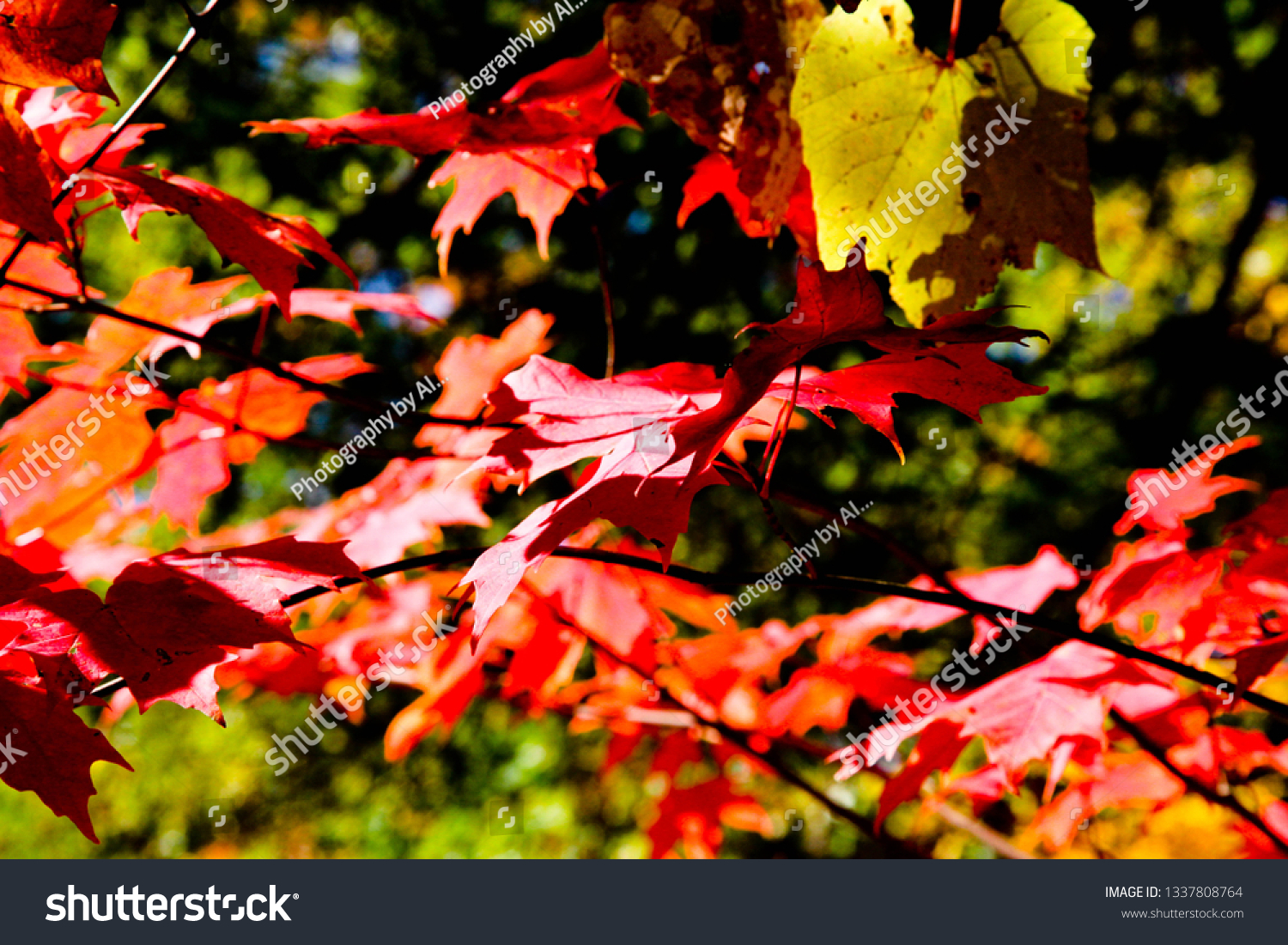 Fall Leaves Backgrounds #1337808764