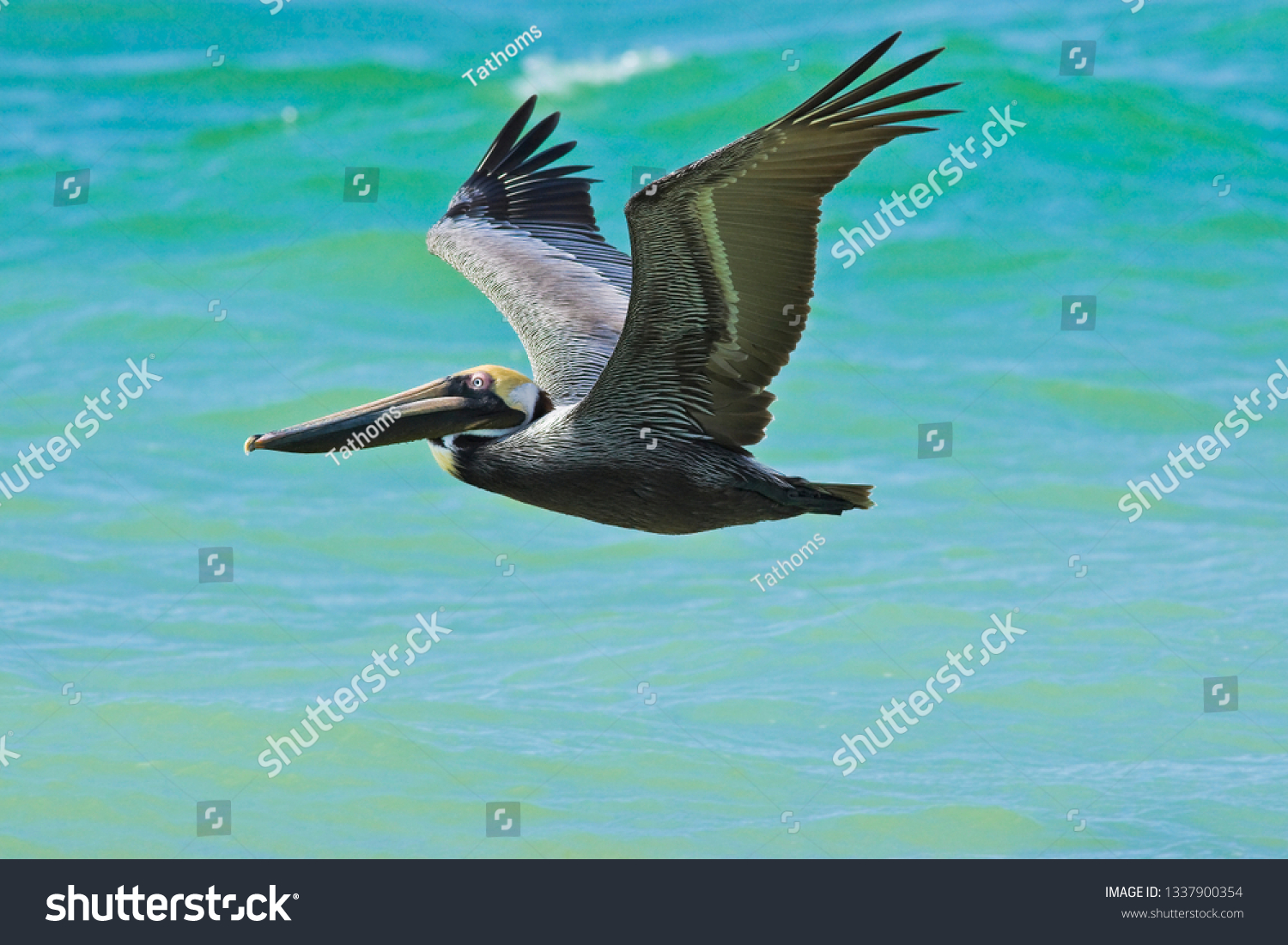 stock-photo-flying-with-pelican-13379003