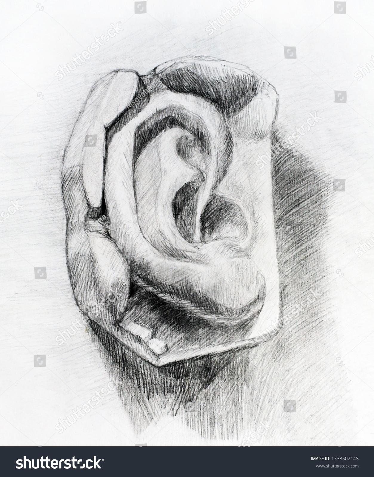 Pencil drawing mans ear art student stock illustration 1338502148