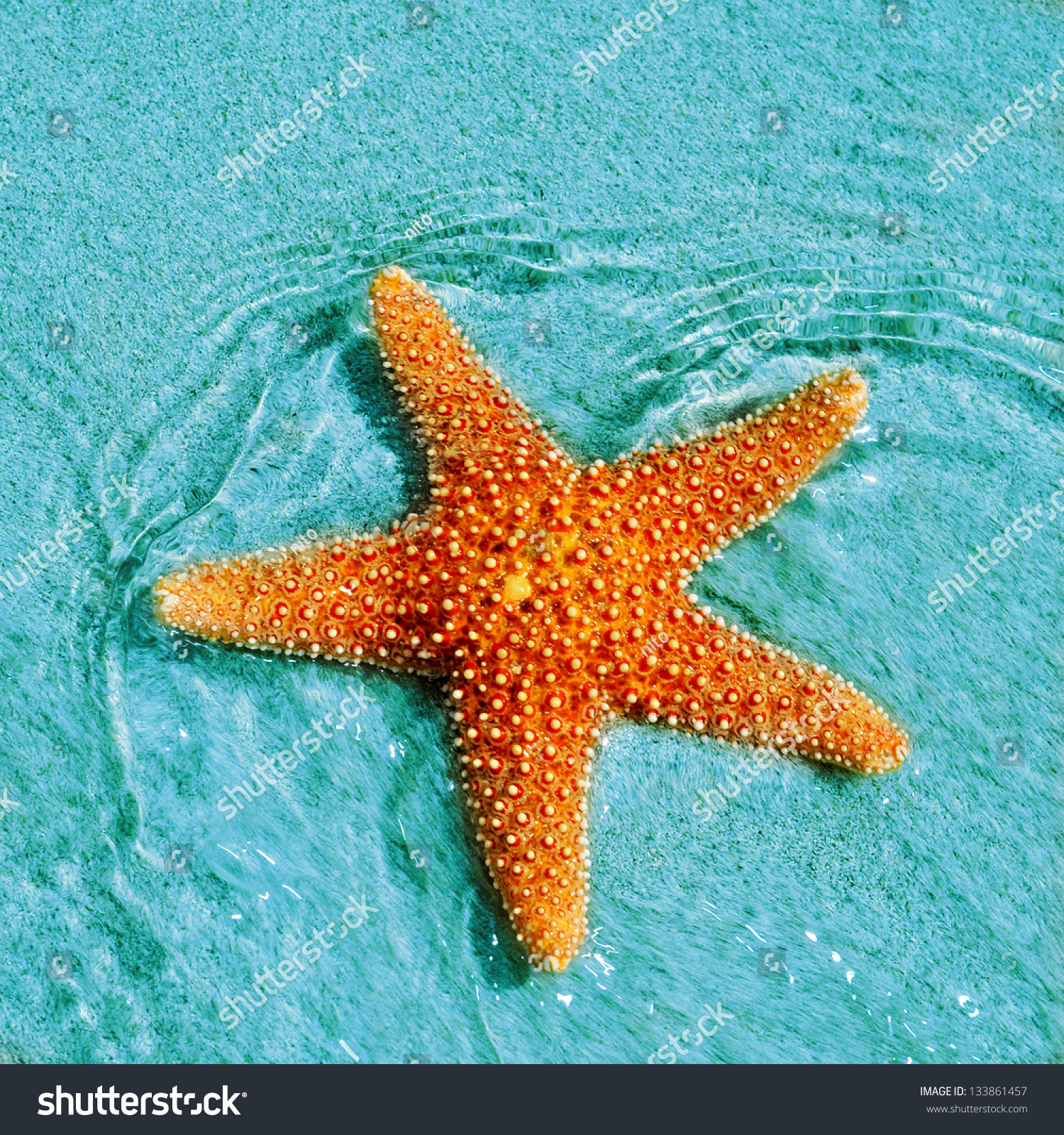 stars of the sea This page is currently being deconstructed and is being replaced by the new our  lady star of the sea school website please follow this link to view the.