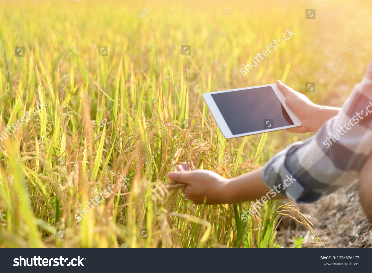 Farmer Sitting Rice Field Using Tablet Technology Stock Image 1338686372