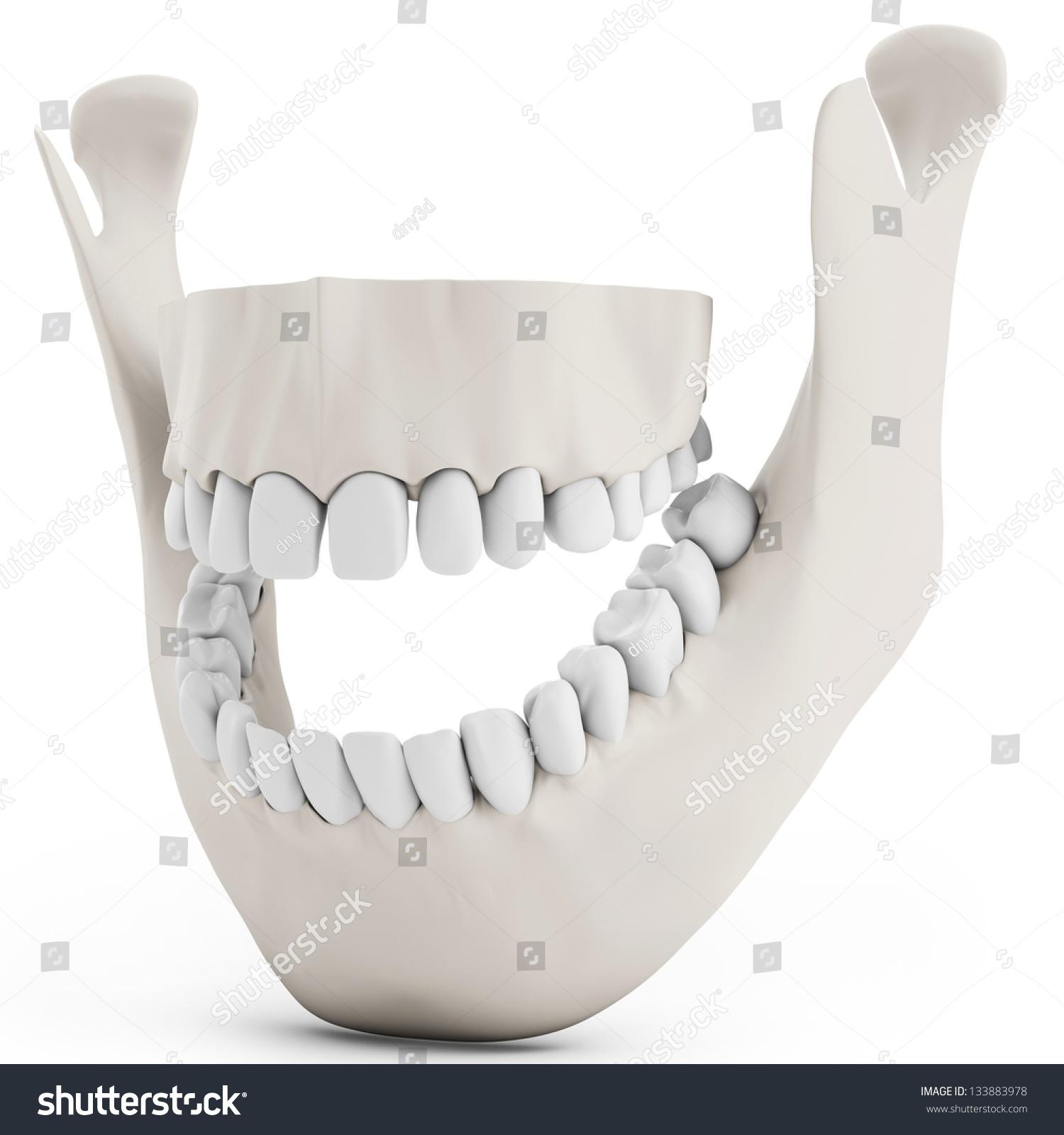 3 D Human Jaw Bone Opened Teeth Stock Illustration 133883978