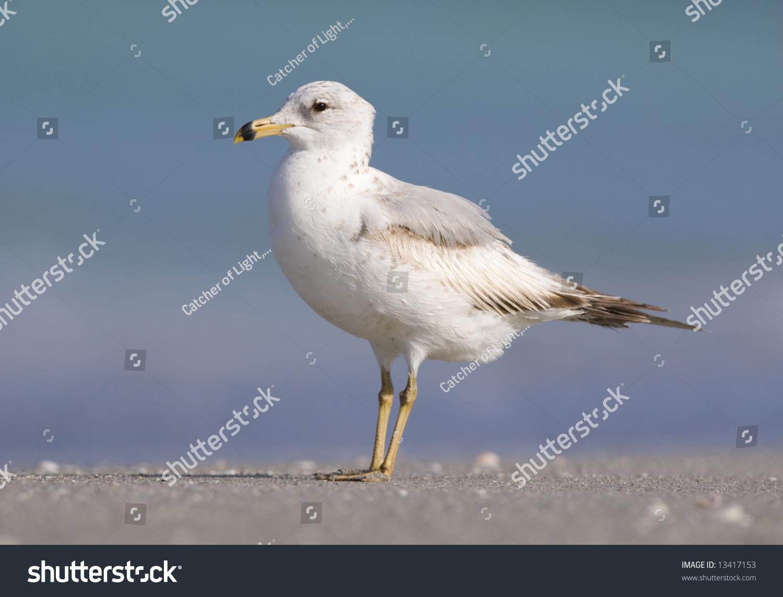 Gull Block Inc