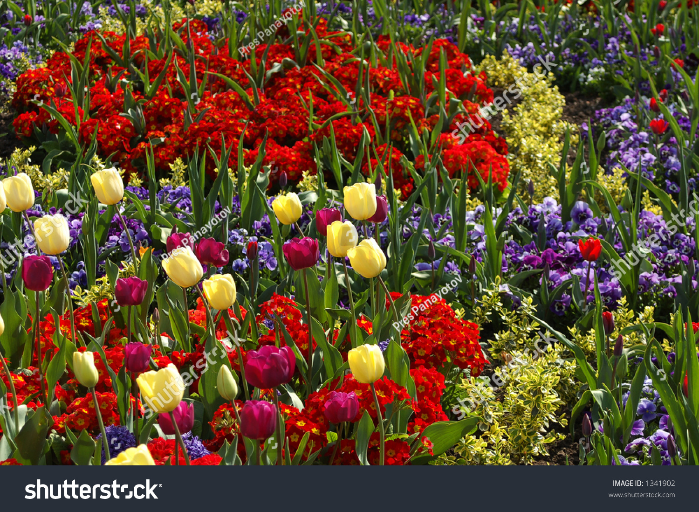Bunch Spring Flowers Flowerbed Regents Park Stock Photo Edit Now