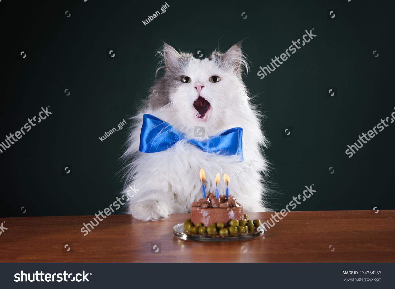 Cat Birthday Cake Candles Stock Photo Edit Now 134254253