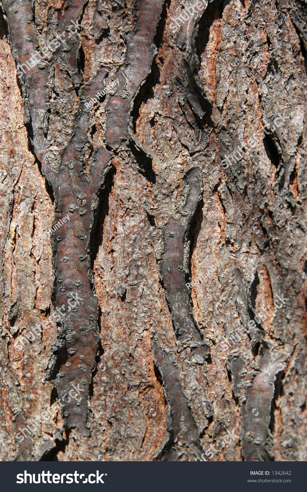 Tree Bark Skyline Honey Locust Gleditsia Stock Photo ...