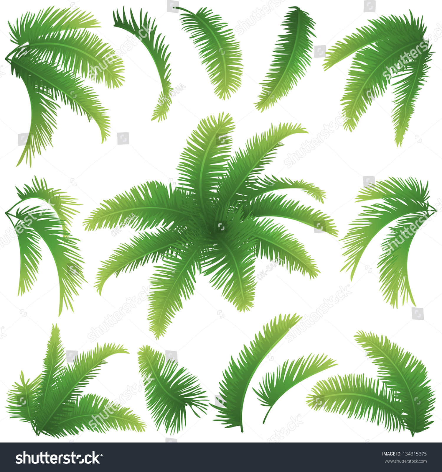 set green branches leaves palm trees stock vector 134315375