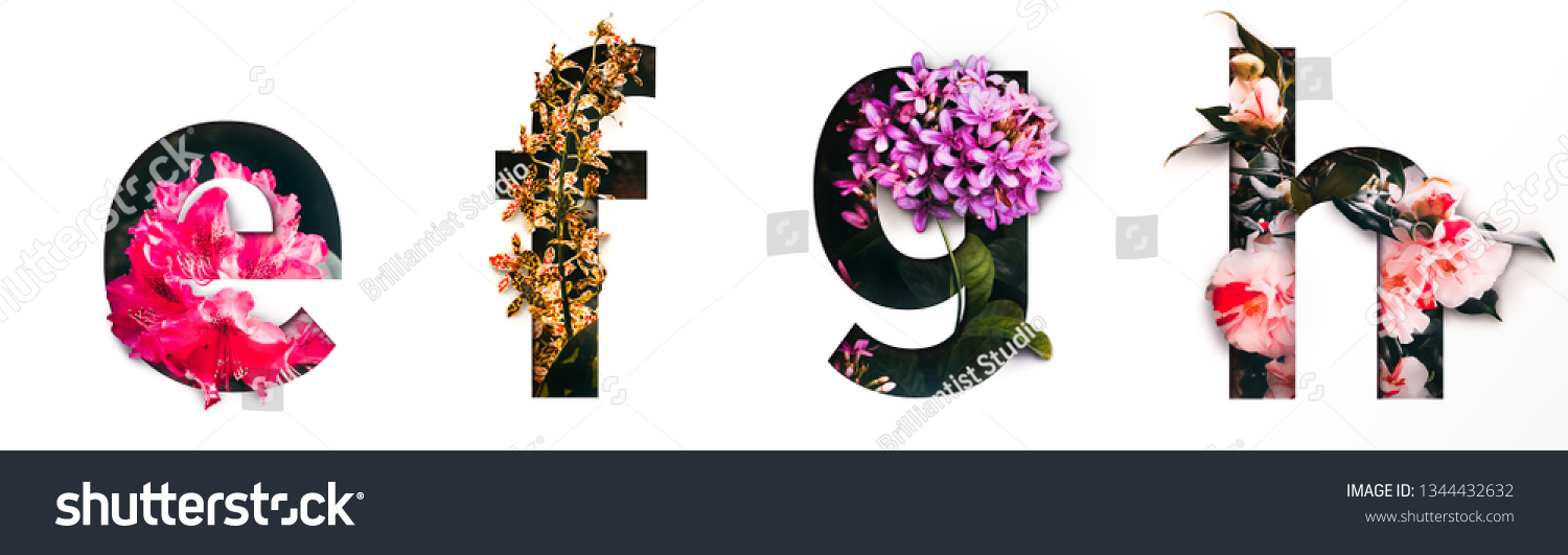Flower font letter e, f, g, h Create with real alive flowers and Precious paper cut shape of alphabet. Collection of brilliant bloom flora font for your unique text, typography with many concept ideas #1344432632
