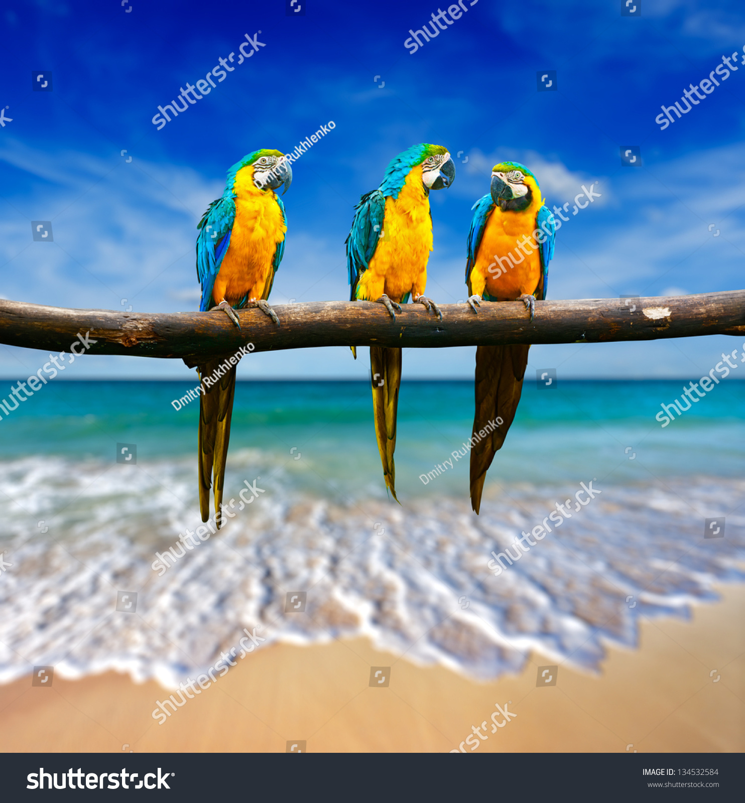 Tropical Vacation Concept Three Parrots Blueandyellow