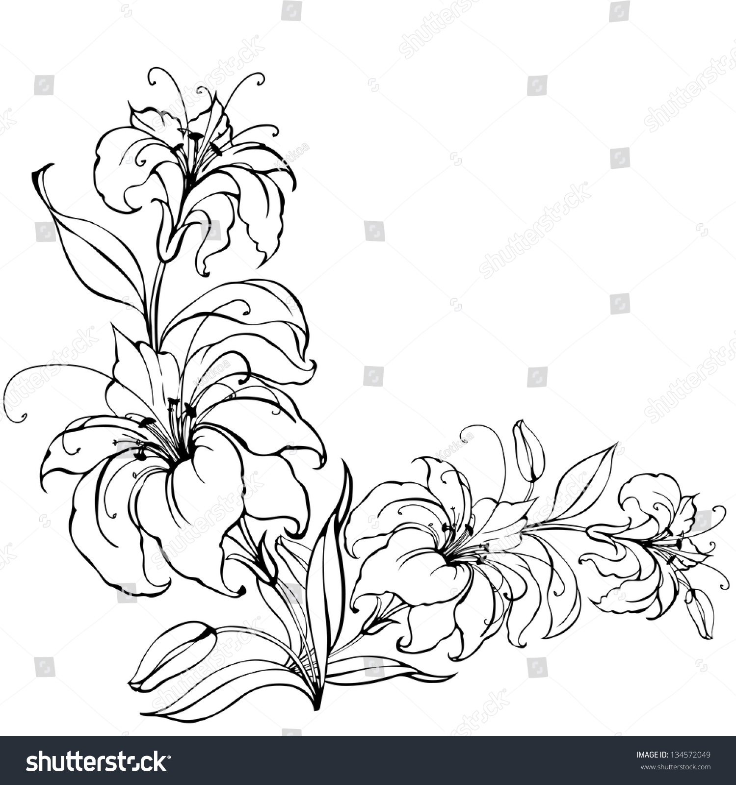 Lily Flower Isolated Over White. Vector Illustration ...