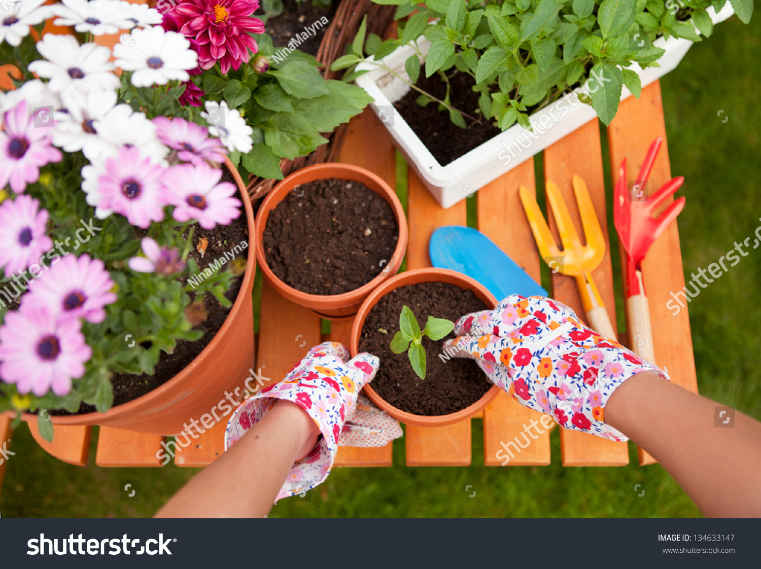 Spring Garden Potting Flowers Stock Photo Edit Now 134633147