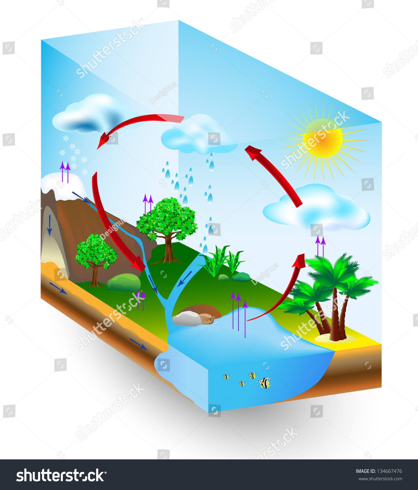 water cycle diagram vector condensation evaporation stock. Black Bedroom Furniture Sets. Home Design Ideas