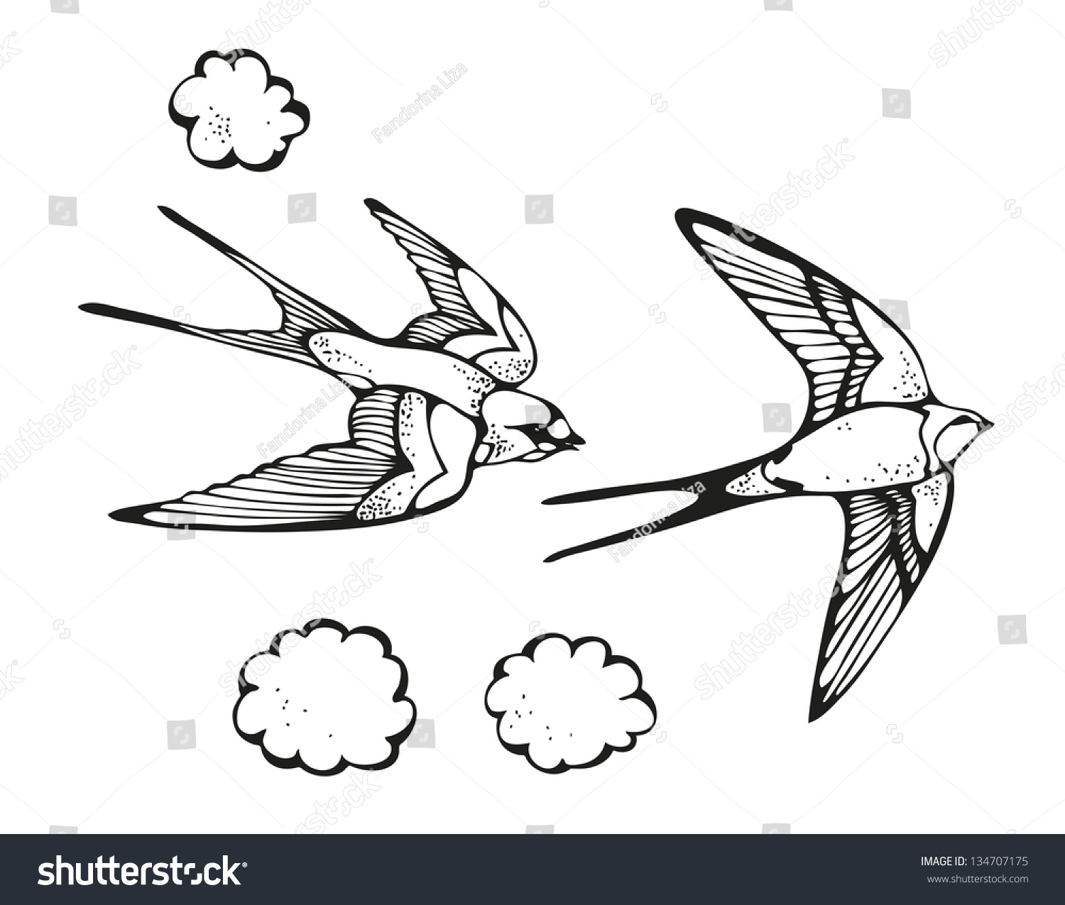 Swallow Drawing Illustration Bird Isolated On Stock Vector ...