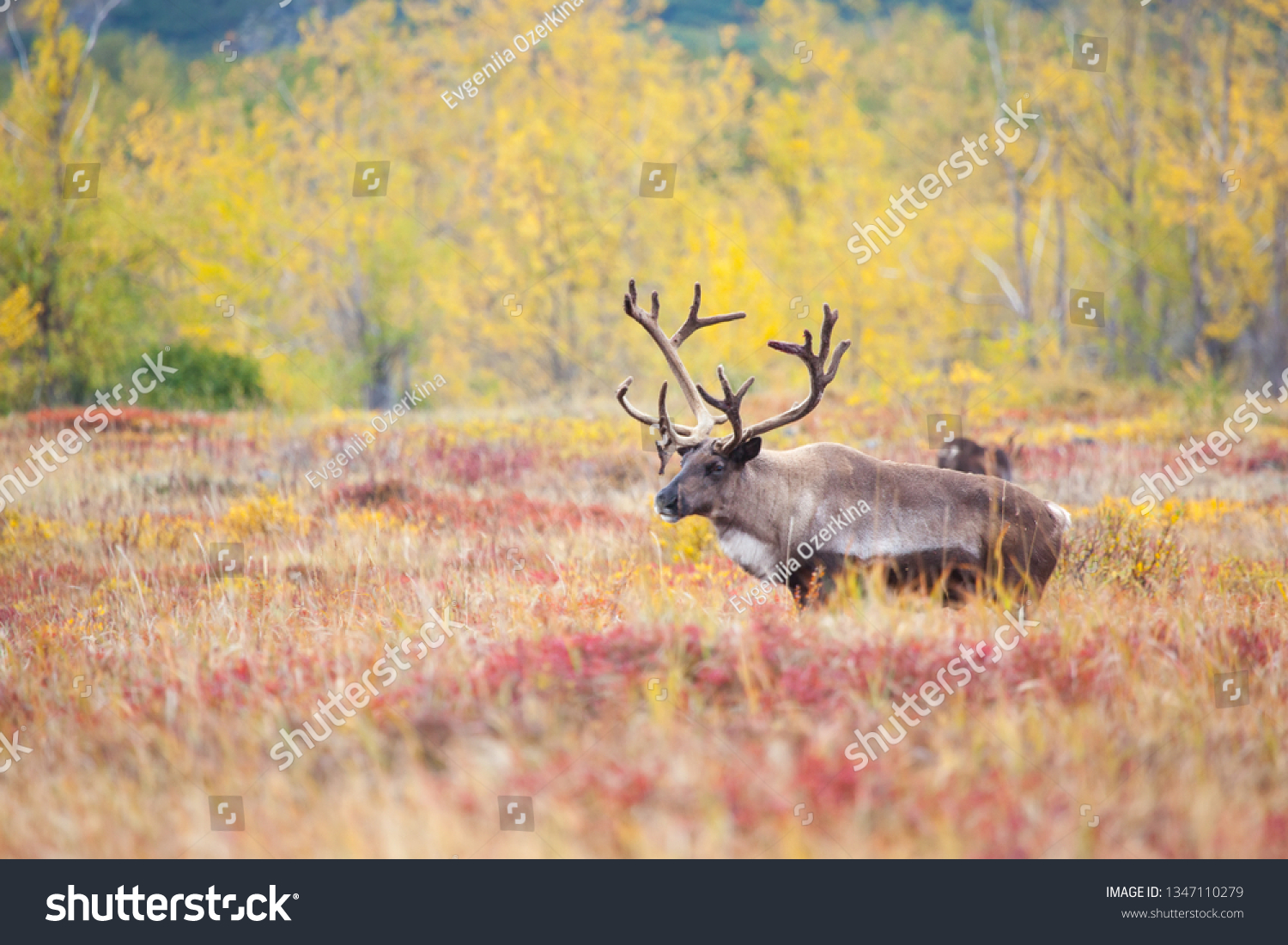 stock-photo-a-reindeer-on-the-background