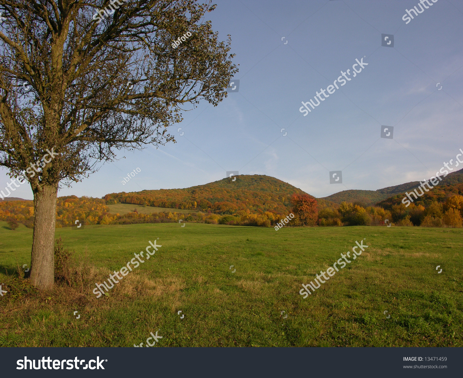 One tree in autumn meadow stock photo 13471459 shutterstock