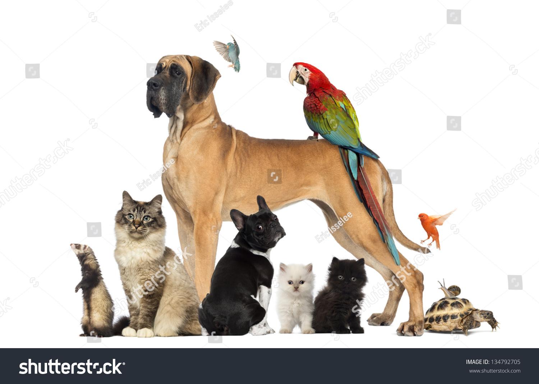 Cat Dog Bird Music