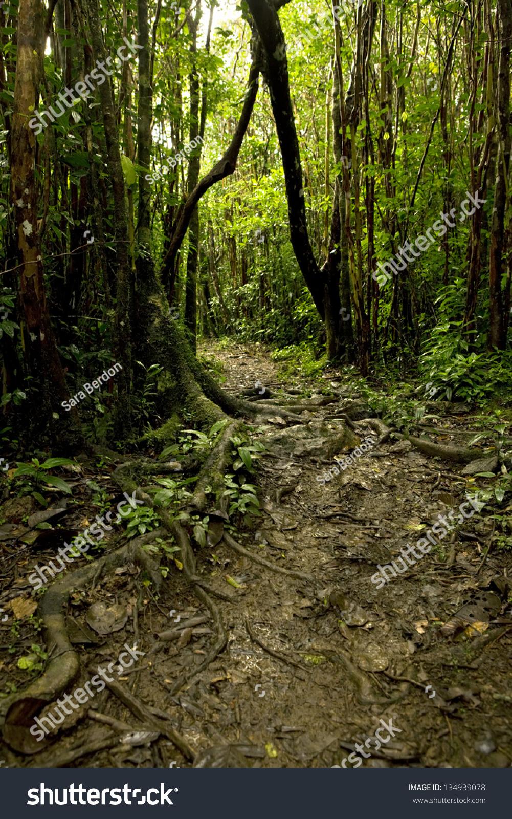 Tropical Rainforest Floor Stock Photo 134939078 Shutterstock