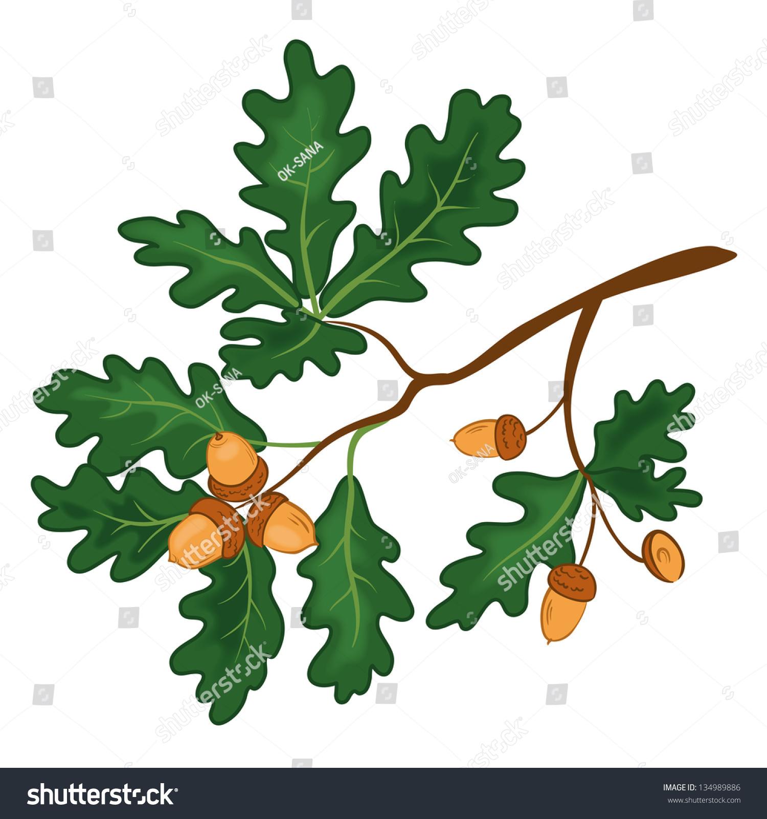 Рисунок дерева дуба с желудями 7