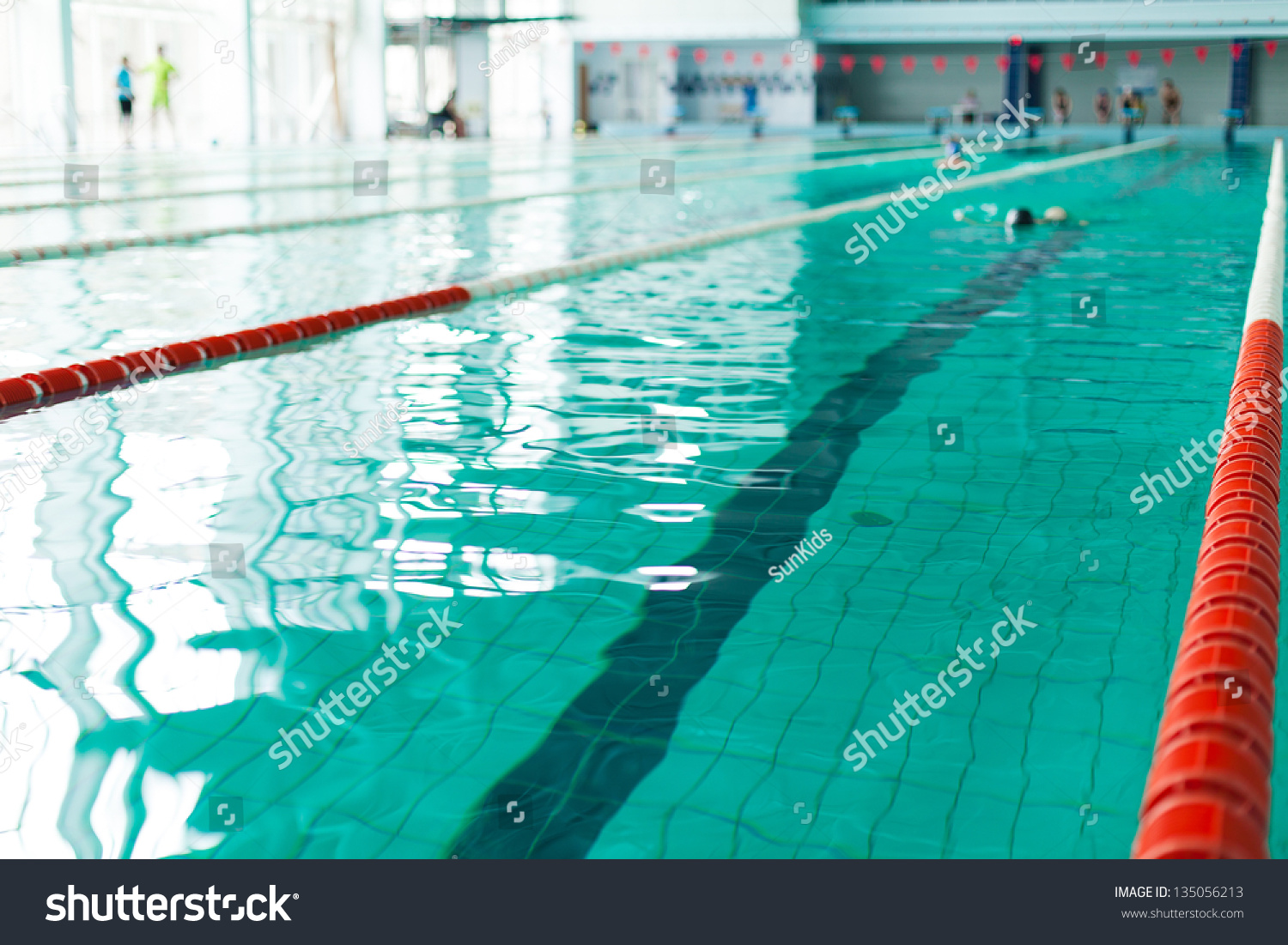 Swimming Pool Lanes Competition Pool Stock Photo 135056213 Shutterstock