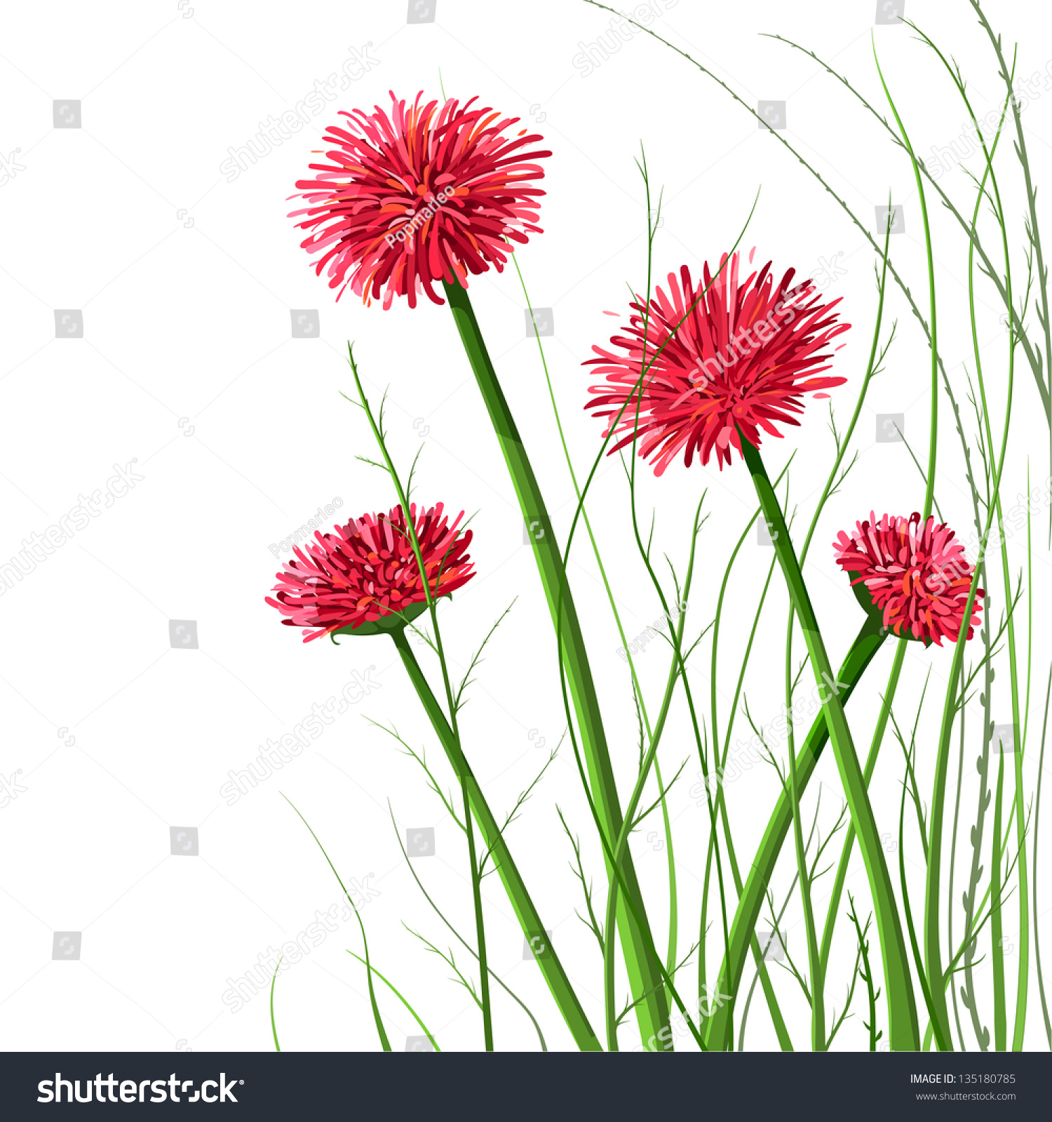 beautiful wild flowers illustration vector decorative flowers and grass illustration eps8 no effects - Decorative Flowers